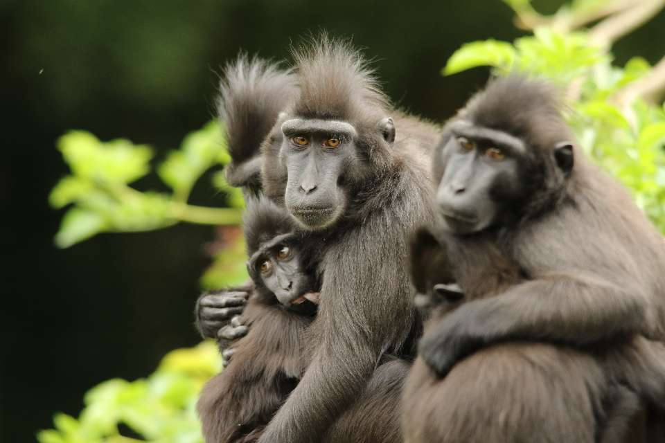 Objectifs Macaques