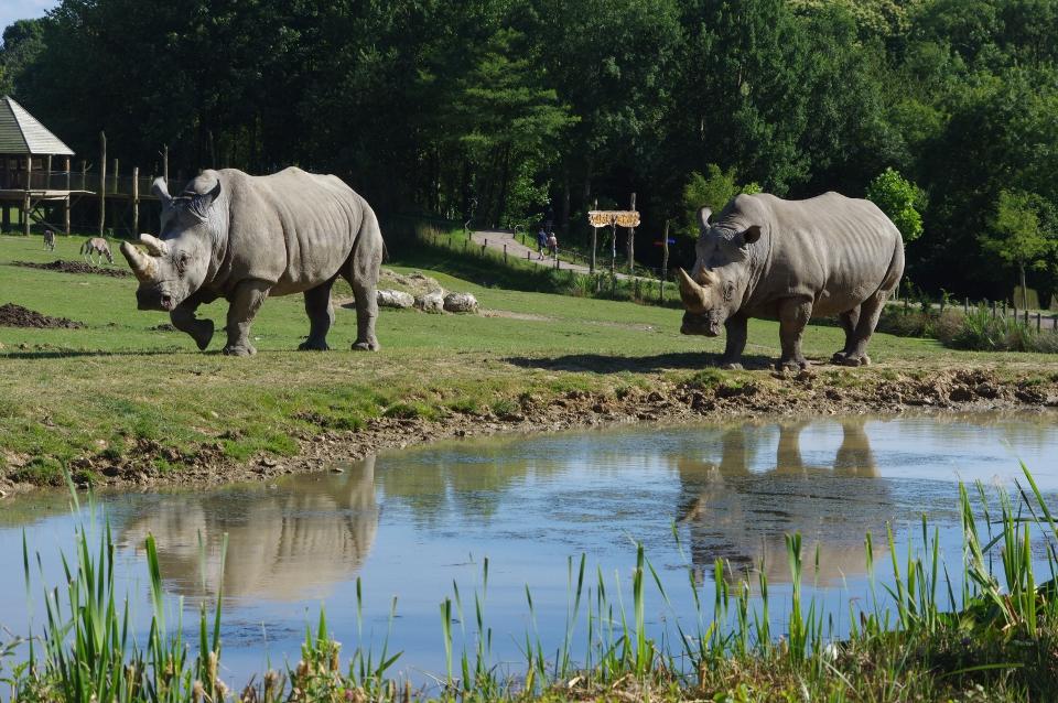 Journée mondiale du Rhinocéros
