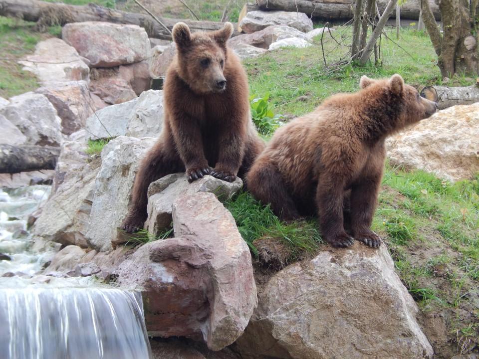 Nouveauté 2017 : La vallée des ours bruns