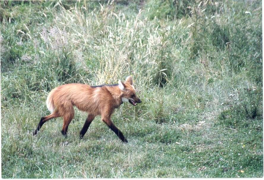 Objectif Loup